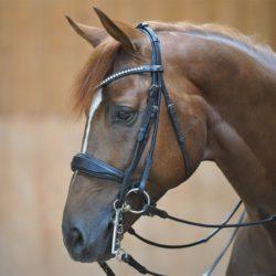 cabezada-bocado-filete-caballo
