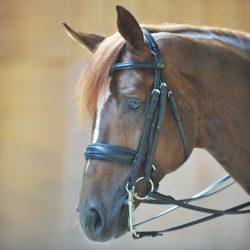 cabezada-fuerte-cuero-caballo